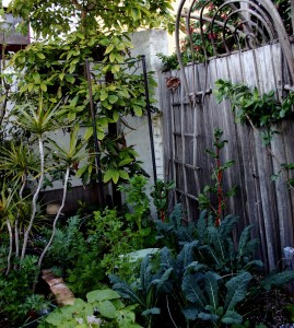 Gaby from Kew VIC_My edible backyard.3_PubsWeb for web